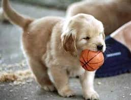 puppy with a tiny basketball in his mouth