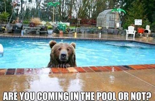 Bear-inside-the-pool