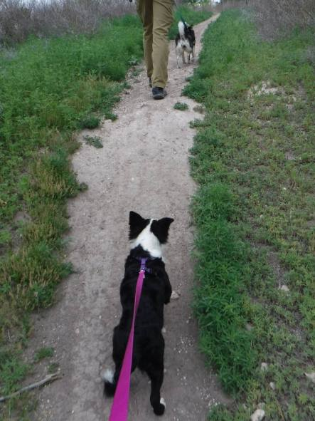 2 dogs on leashes lead the way on a hike